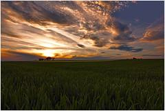 Evening on the fields (FocusPocus Photography) Tags: sunset field clouds landscape evening abend sonnenuntergang feld wolken lanschaft