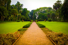 Vivid (Fajar Pangestu) Tags: park travel plant flower green nature field grass garden indonesia landscape botanical fuji outdoor visit foliage flowerbed fujifilm serene fujinon bogor x10 bogorbotanicalgarden fujifilmx10 fujix10