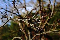 IMG_3294 (Cezara00) Tags: holiday macro tree waiting day bokeh rosa calm di campo sole albero calma pianta trama aperto motivo calmo organico copac profondit groviglio ramoscello cigliegio