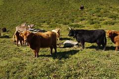 IMGP5464 (Alvier) Tags: schweiz graubünden albulatal surses oberhalbstein ziteil mutten obermutten salouf