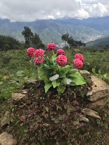 Bhutan flora