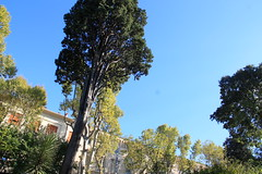 Le jardin des plantes de Montpellier, France (Kristel Van Loock) Tags: lejardindesplantes montpellier montpelliercity montpelliernow seemymontpellier visitmontpellier france botanicalgarden botanischetuin botanischergarten giardinobotanico lejardindesplantesdemontpellier francia frankrijk frankreich httpwwwumontpellierfruniversitepatrimoinejardindesplantes jardnbotnicodemontpellier jardinbotanico jardinbotanique ortobotanicodimontpellier zuidfrankrijk southoffrance
