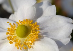 close up (kerrylockwood1) Tags: white yellow closeup flowers plant bright sunny macro photography green