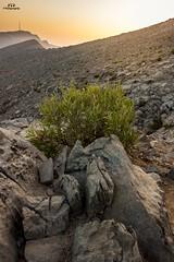 #sunset #jabeljais #highest #mountain #uae #rak #canonme #travel #photography (Rijaz PTP) Tags: canonme uae photography jabeljais sunset mountain highest travel rak