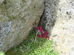 after the Solstice (Annie-Sue Jyelra) Tags: offerings