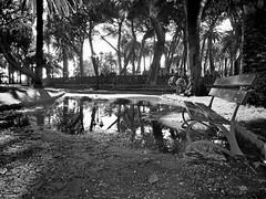 Giardini pubblici di Ventimiglia - panchina e pozzanghera BN (mareblu2013) Tags: pozzanghera giardini ventimiglia liguria panchina riflesso bn biancoenero