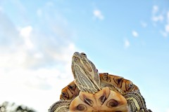 Sky's the limit (City Turtles) Tags: blue nature sky love flickr petphotography photography photo dslr canon nyc turtles redearedslider animal pet outdoors turtle