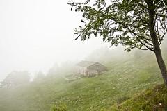 Nebbia in Valle Elvo (dafnemunaretto) Tags: nebbia fog baita narcisi clouds valleelvo valleoropa valle alpi alps biellese twop