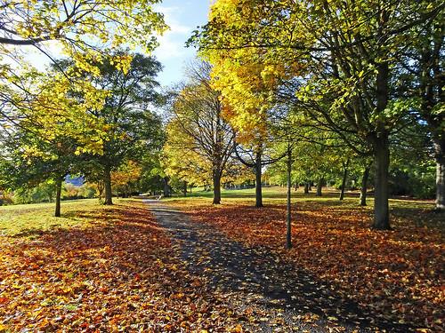 Dudhope Park Autumn colours