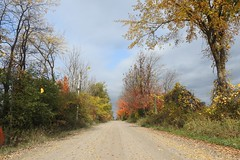 Autumn Leaves (Sara Turner Photography) Tags: autumn leaves leaf countryroad gravelroad stormyday stormclouds windy nature landscape fall trees grapes