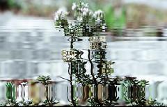 Liquid Flower (Sebmanstar) Tags: art pentax photography couleur color creation creative creatif image imagination imagine transformed research work digital numerique light