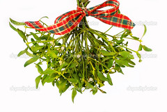 Bunch of mistletoe (drey) Tags: album background berry branch bunch celebration christmas december decoration festive foliage green hanging holiday isolated kiss kissing leaf leaves love misteltoe mistletoe nature new plant red ribbon symbol tradition traditional twig viscum white wish year lodz poland