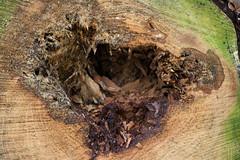 ckuchem-7080 (christine_kuchem) Tags: abholzung baum baumstmme bume einschlag fichten holzeinschlag holzwirtschaft wald waldwirtschaft