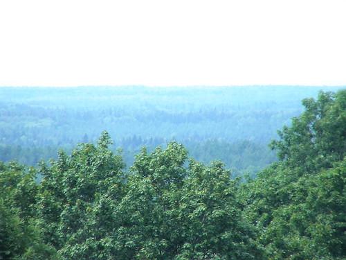 Лес в Копорье