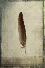 The Writing (AntonioArcos aka fotonstudio) Tags: textures flypaper feather writing concept