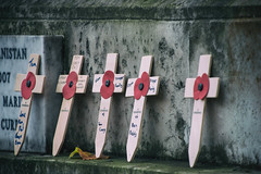 Remembrance Sunday - [Explored] (cuppyuppycake) Tags: rememberance sunday 2016 never forget poppy crosses