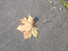 Autumn (claireartistpoet) Tags: autumn leaf shadows light 1 one