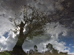 Tendencious (andressolo) Tags: water trees tree reflections reflect reflejos reflejo reflected ripples river reflection ro clouds distortion distortions distorted