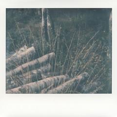 Foto Polaroid Image 0005 (marlis-art) Tags: imagespectra farbfoto impossible film polaroid