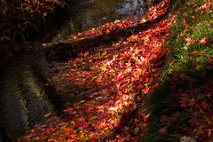 Running autumn (Irina1010 - out) Tags: creek mapleleaves colorful water reflections running november foliage light shadows nature canon gibbsgardens