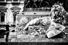 Urban Safari (Petricor Photography) Tags: milan street photography canonpersonalconnection candid black white blackandwhite lion people statue urban city historical monument
