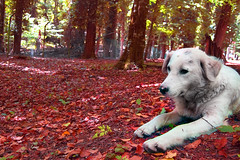 (stefano ciccocioppo) Tags: wood trees red dog white verde green yellow cane foglie alberi d50 relax leaf nikon giallo rosso bianco stefano bosco forestaumbra flickrunitedaward ciccocioppo