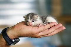 Nuevas generaciones (Alfredo Blanquer (Konqueror)) Tags: gato cachorro bebe smcpa50mmf14