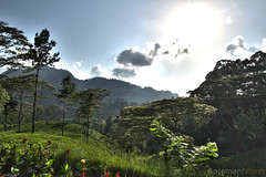 Tea fields of Kany, Sri Lanka (BasementVision) Tags: world ocean new uk travel summer vacation brown sun holiday hot tree london film alex clouds photoshop canon photography james countryside photo video high globe media asia europe track view dynamic tea indian side tripod country basement adventure explore sri lanka vision backpacking 7d indie fields resolution 5d daytime alexander dslr maldives backpacker filming filmmaking hdr kandy journalism glide practitioner experiences glidetrack basementvision wwwbasementvisioncouk wwwtwittercombasementvision wwwfacebookcombasementvision wwwflickrcomphotosbasementvision