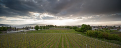 Vineyard (Tobias Knoch) Tags: sunset lake storm green lines rain canon island eos wine mark iii insel ii 5d 24mm tobias 35 bodensee konstanz constance wineyard tse weinberg knoch untersee reichenau gpe2 gnadensee 9se hitech0 grn