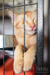 130515_Bambi_010 (furry-photos) Tags: pet cat kitten adopt adoption