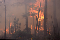 Wildfire in the Pacific Northwest (BLMOregon) Tags: forest fire crew engines fireman firemen firefighter firefighters wildfire suppression