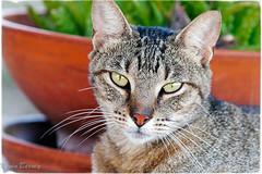 Stable Cat (klick4) Tags: cats cat portraits kat feline kittens whiskers kats