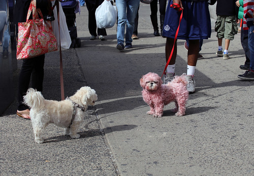 Pink dog and friends