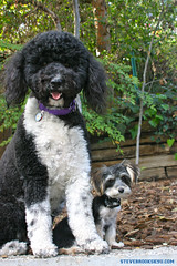 """LITTLEBUDDY&DAISY • <a style=""""font-size:0.8em;"""" href=""""http://www.flickr.com/photos/95808399@N03/8984571186/"""" target=""""_blank"""">View on Flickr</a>"""