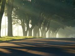 Manhã de neblina | Misty Morning (IgorCamacho) Tags: morning autumn brazil sun fall paraná misty fog brasil raios day foggy southern rays neblina outono sul manhã névoa