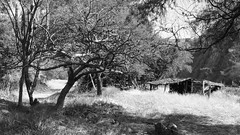 Mexico Rural - la Cañada en Negro & Blanco :: ([JBR]) Tags: light white mountain black tree blanco luz nature monochrome america montagne landscape mexico arbol grey gris mono noir natural outdoor negro naturallight natura paisaje lumiere latin oaxaca latinoamerica mexique latino latina arvore montaña paysage extérieur arbre blanc nord norte centrale latine centroamerica cañada amerique lumierenaturelle naturalzea