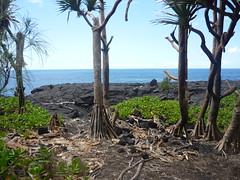 Ile de La Runion (sOoZ__) Tags: mer fleurs de la soleil ile des pont piton dodo bourbon plage indien tortue runion avion rochers lave orchide volcan neiges ocan margouillat tropique fournse