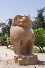 El-Ashmunein Open-Air Museum Baboons 01 (eLaReF) Tags: openairmuseum baboons elgebel tunaelgebel templeofthoth tunaelgebell elgebell