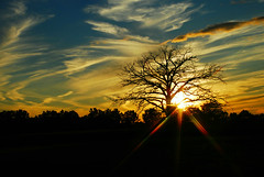 City Sunset (Malena ) Tags: city sunset summer sky tree love nature silhouette clouds nikon michigan mfp 2013 puremichigan