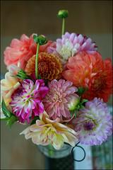 fresh flowers from the market (aloalo*) Tags: dahlia canada flower bc farmersmarket ladner ladnervillagemarket