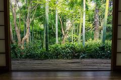 kchi Sans View (fushoku) Tags: 160 190mm apsc alpha6000 arashiyama architecture bamboo building epz1650mmf3556oss emount forest green iso1250 japan kyotocity kyto light mirrorless nature outdoor plant sony spring sun tree f110 kchisans