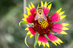 20150516_0309_Arboretum - Ava.jpg (Kari Silva Photography) Tags: nature ava outdoors amber dallas spring sony arboretum botanicalgarden 2015 dallasarborretum a6000