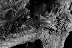 bois 1 (photoRSV) Tags: bw nb forillon gaspesie woods
