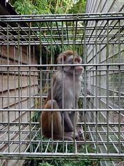 best_075 (OurTravelPics.com) Tags: best tufted capuchin bestzoo