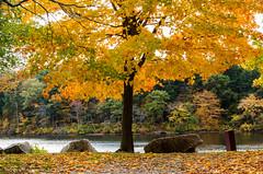 Houghton's Pond (alohadave) Tags: bluehills houghtonspond massachusetts northamerica overcast pentaxk5 places pond sky unitedstates water smcpda1650mmf28edalifsdm