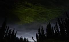 borealis by proxy (RhinoSkin) Tags: sky grass spruce water reflections