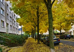 Autumn is the Parisian suburb (vintage114) Tags: sony a6000 sigma alfortville