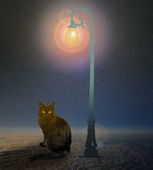 It is still dawn (jaci XIII) Tags: gato noite lmpada cat night lamp