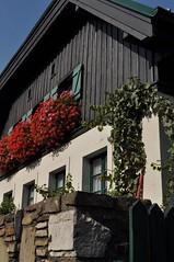 sDSC_0010 (L.Karnas) Tags: wien vienna wiede    viena vienne autumn austria sterreich herbst 2016 weinwandertag wein wander tag wanderung wine wandering neustift am walde
