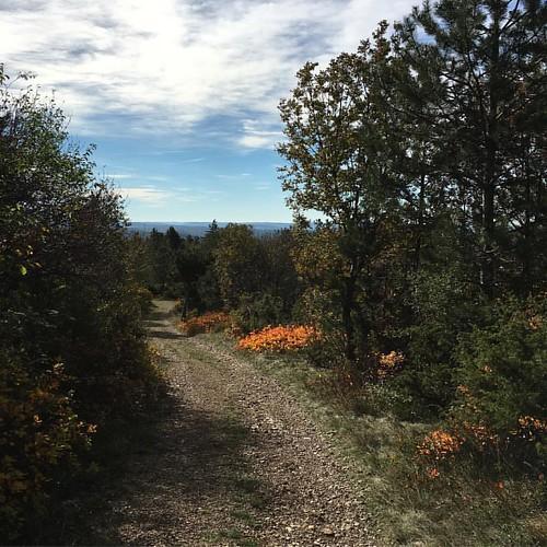 """Lo chiamano """"foliage"""". Una volta si diceva """"andiamo a vedere i colori dell'autunno""""."""